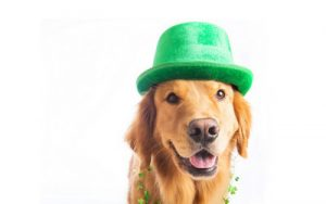 dog green hat