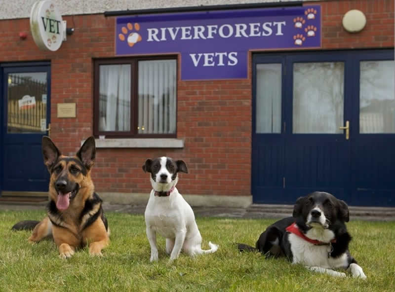 Riverforest Vets in Leixlip turns 10